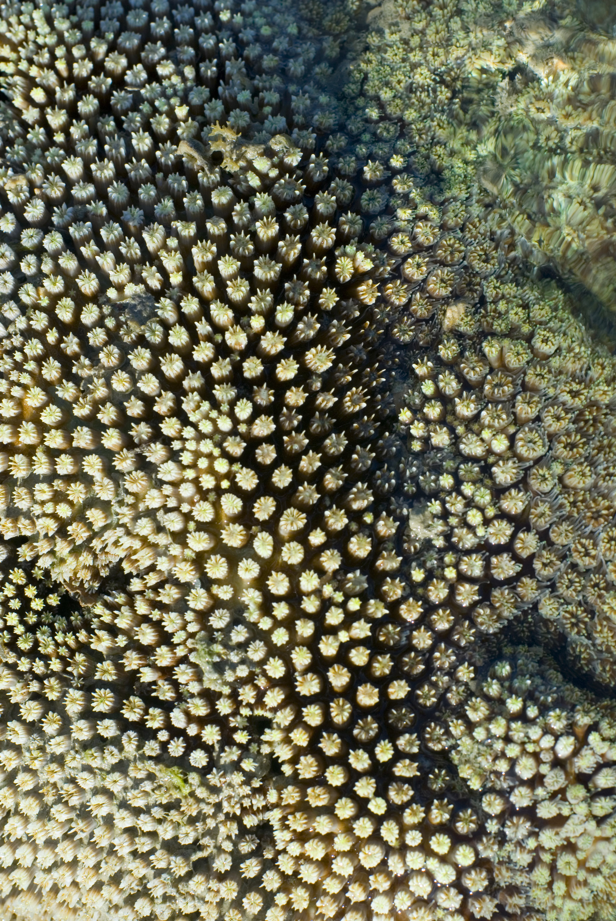 macro image of an array of hard coral polyps