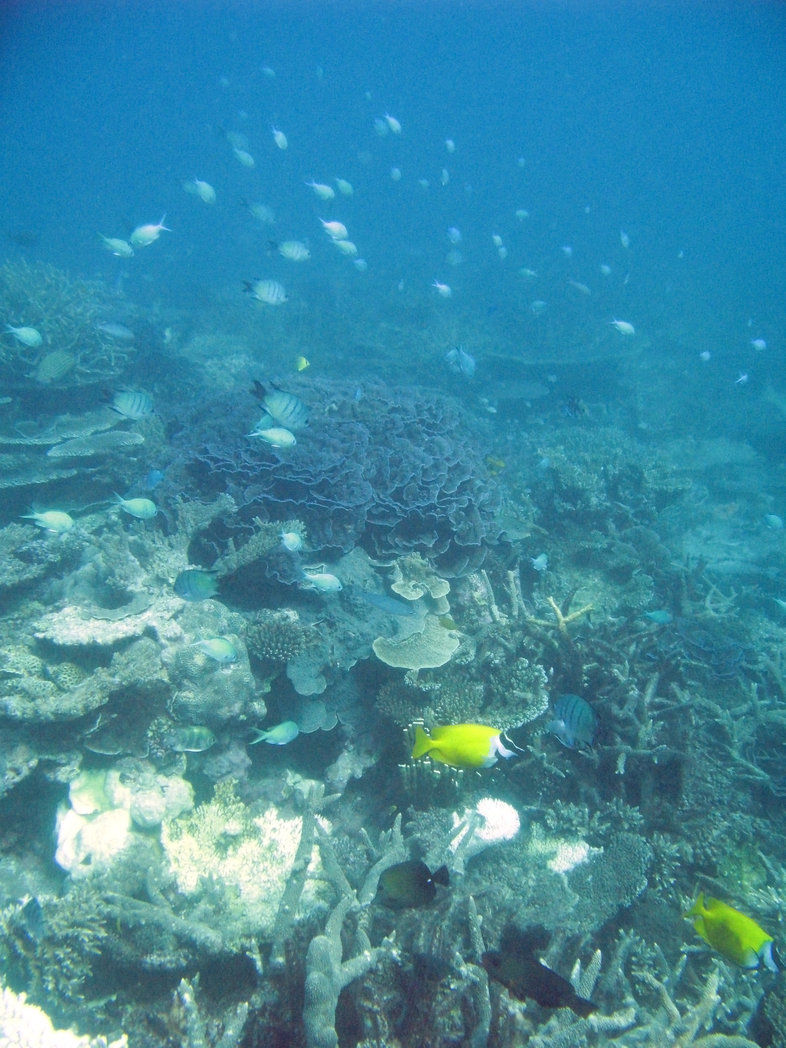 schools of fish swimming amongst a coral reef