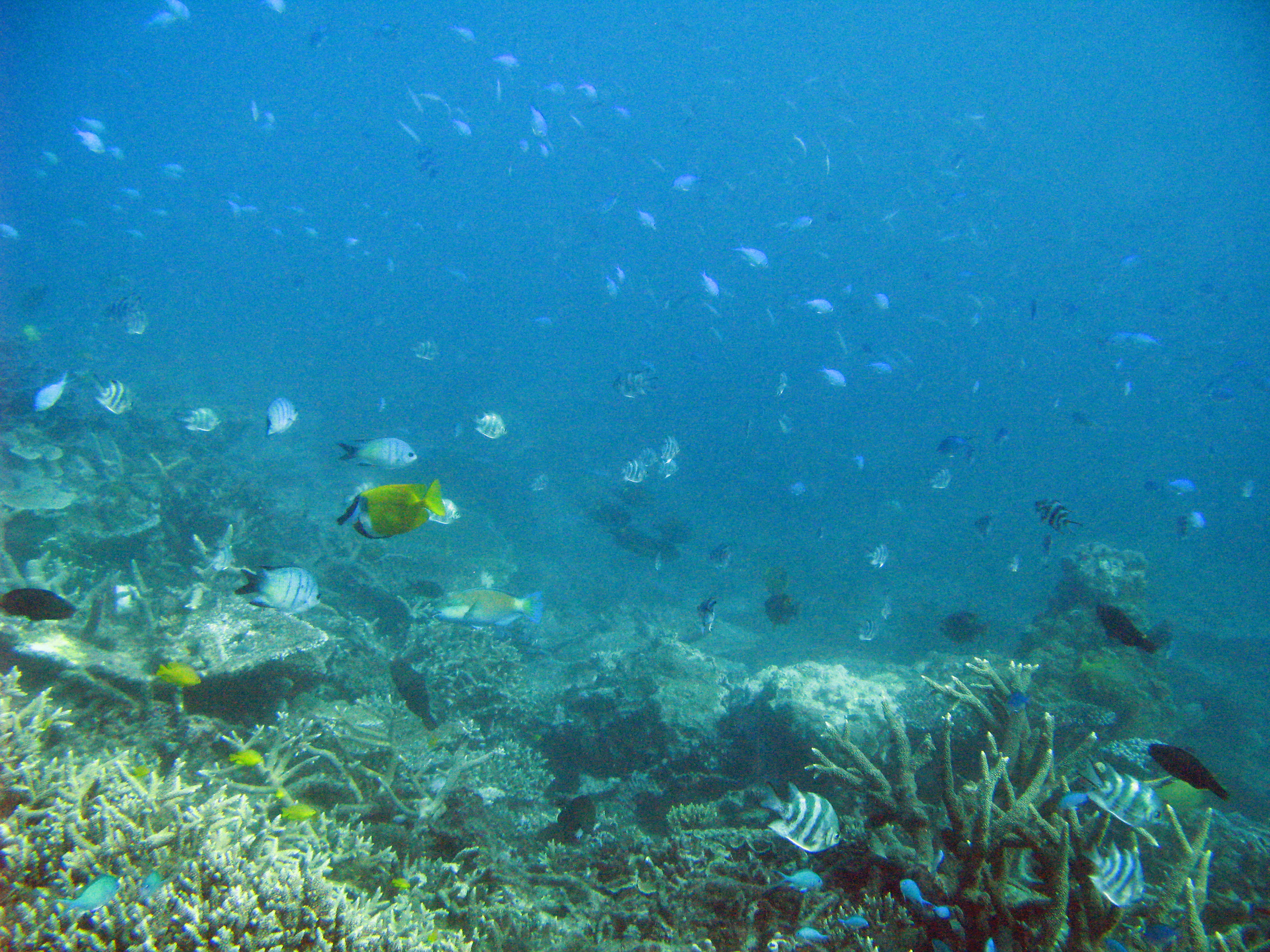 an underwater scene with corals and small reef fish