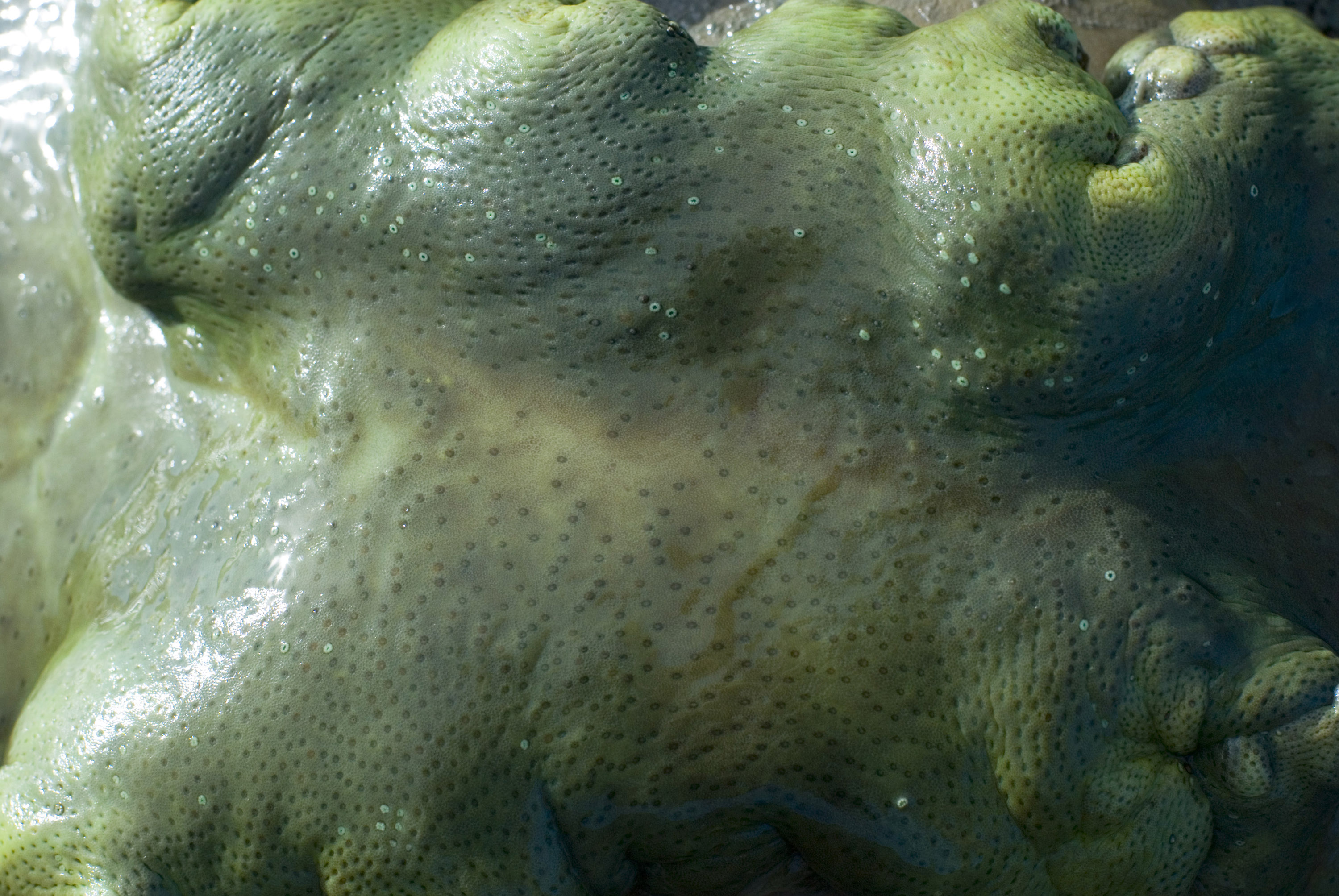 moist green leather coral surface
