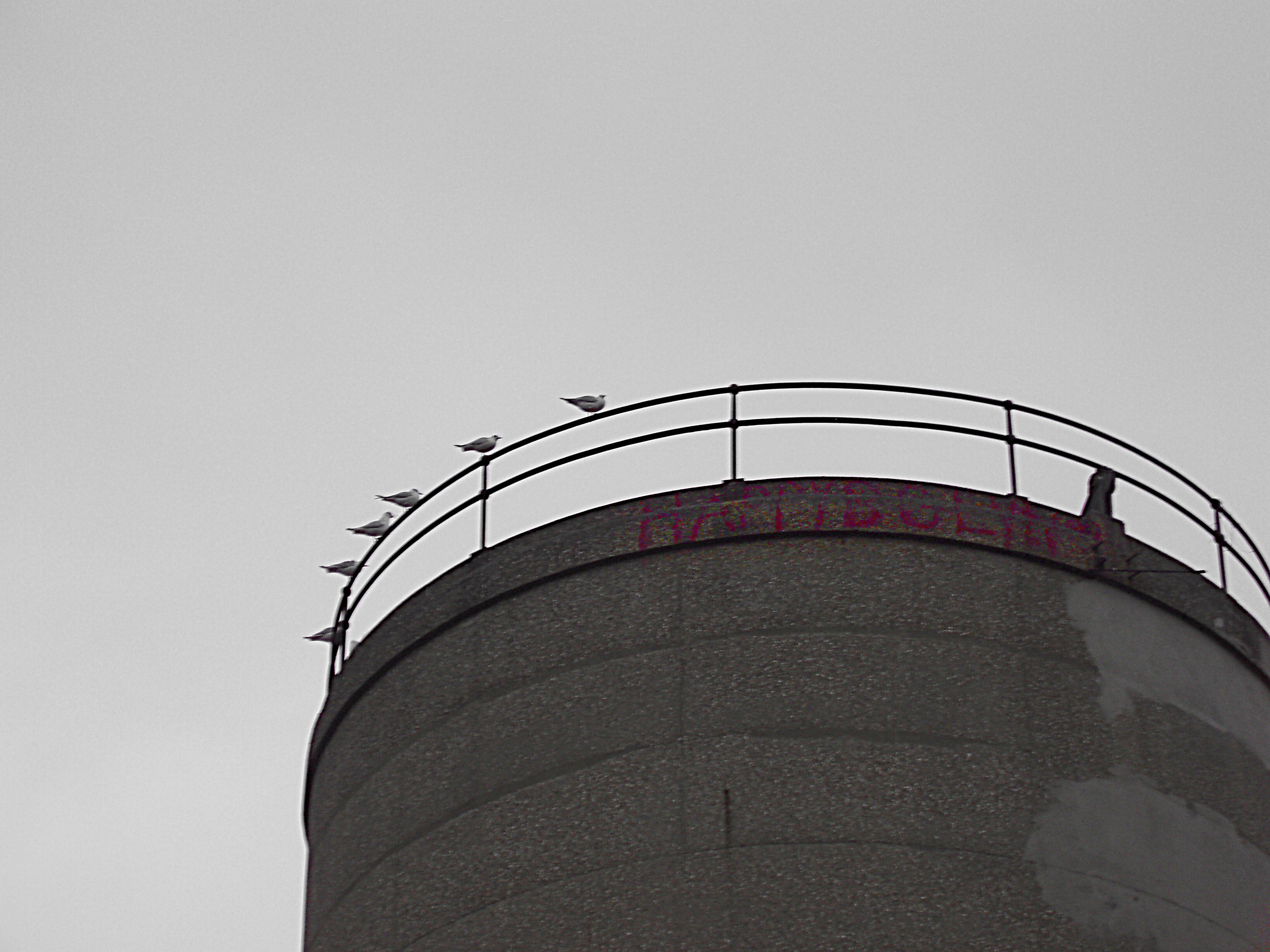 concrete water tower with pigeons