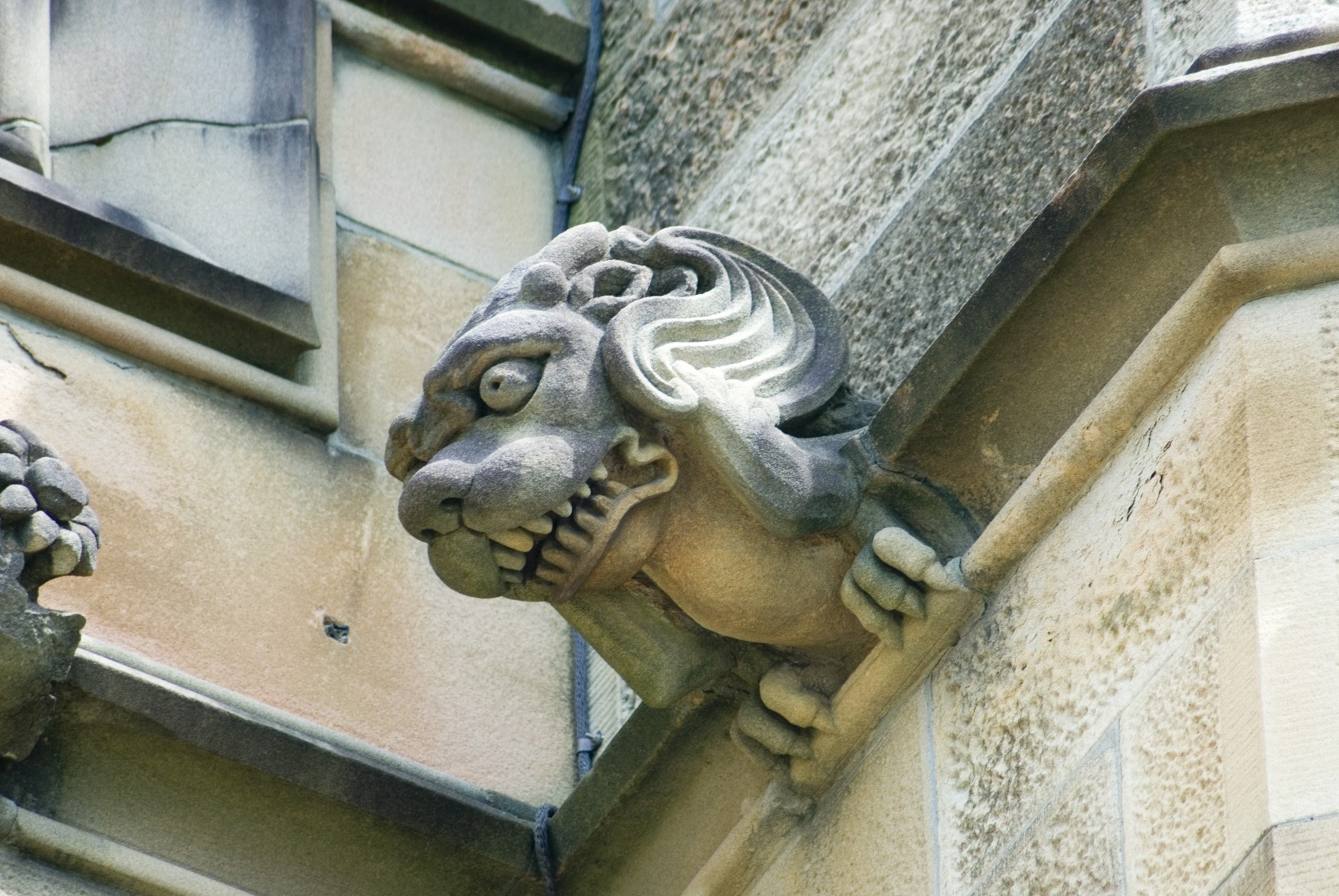 Stone Scuplture With Gnashing Teeth And Wavy Hair Keywords Gargoyle Gargoyles Gothic Old Creature Grotesque Revival Architecture