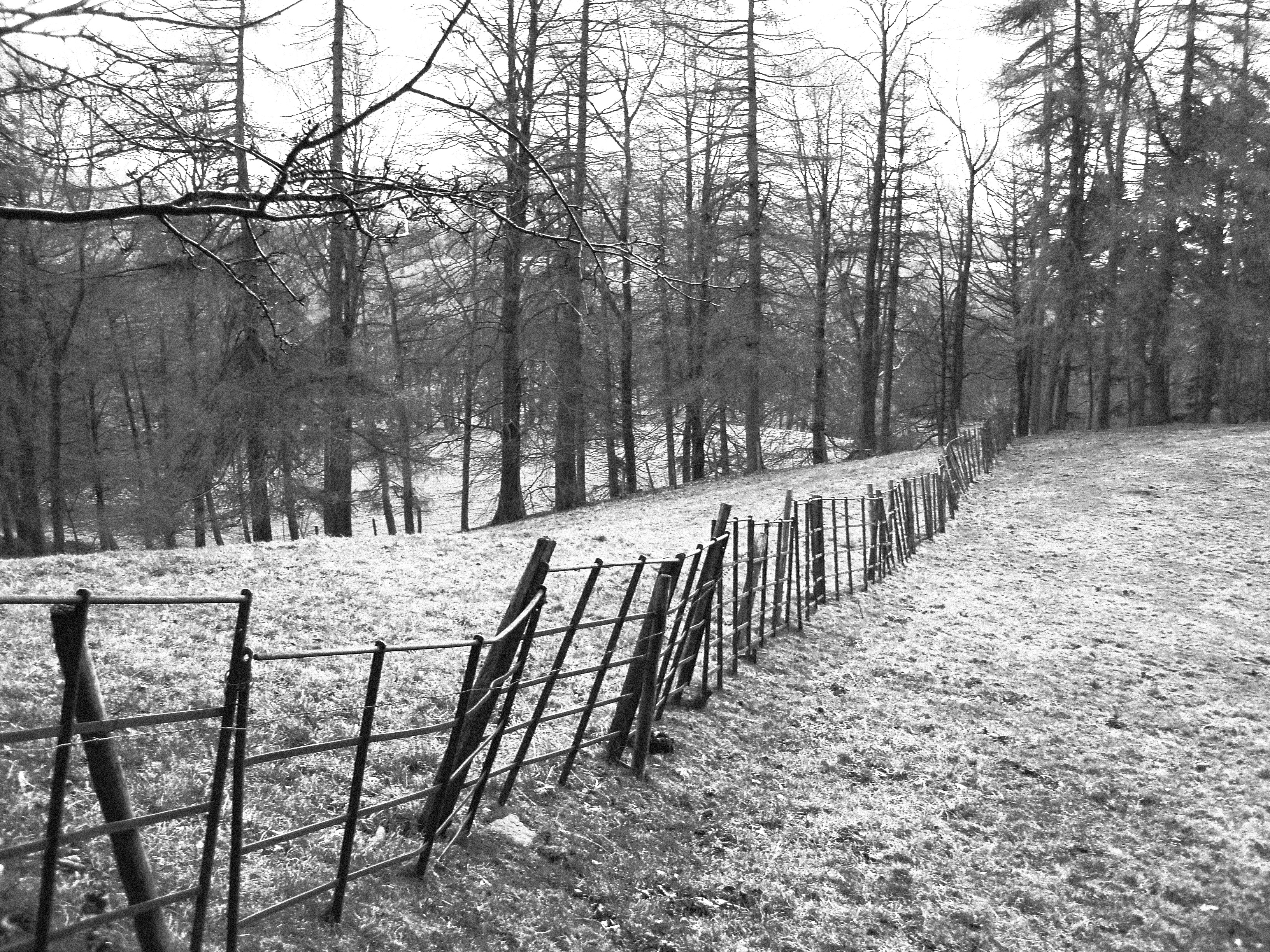 black and white high contrast photo of a metal fence