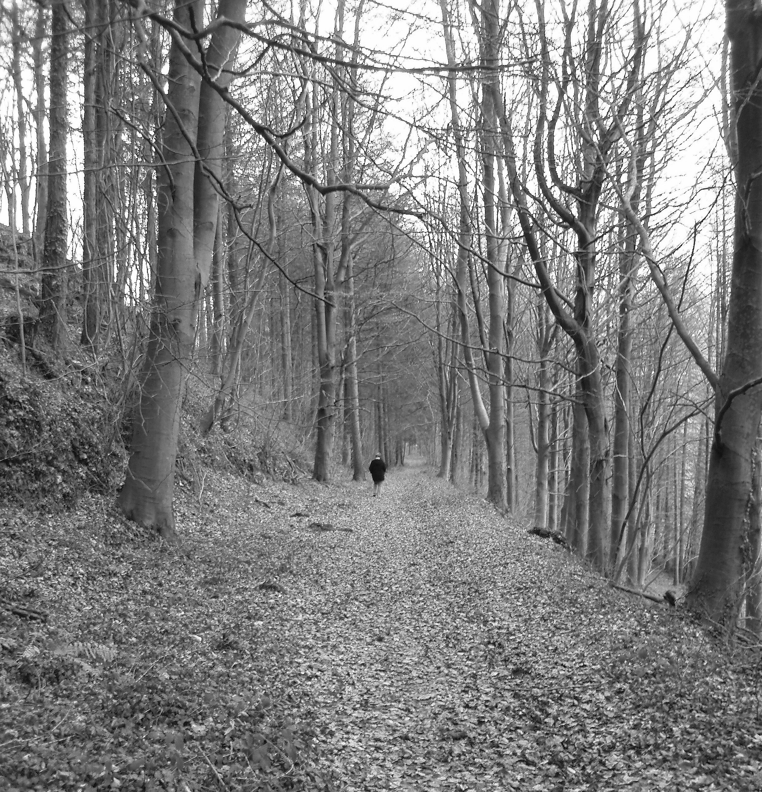 lone individual walking through a winter woodland