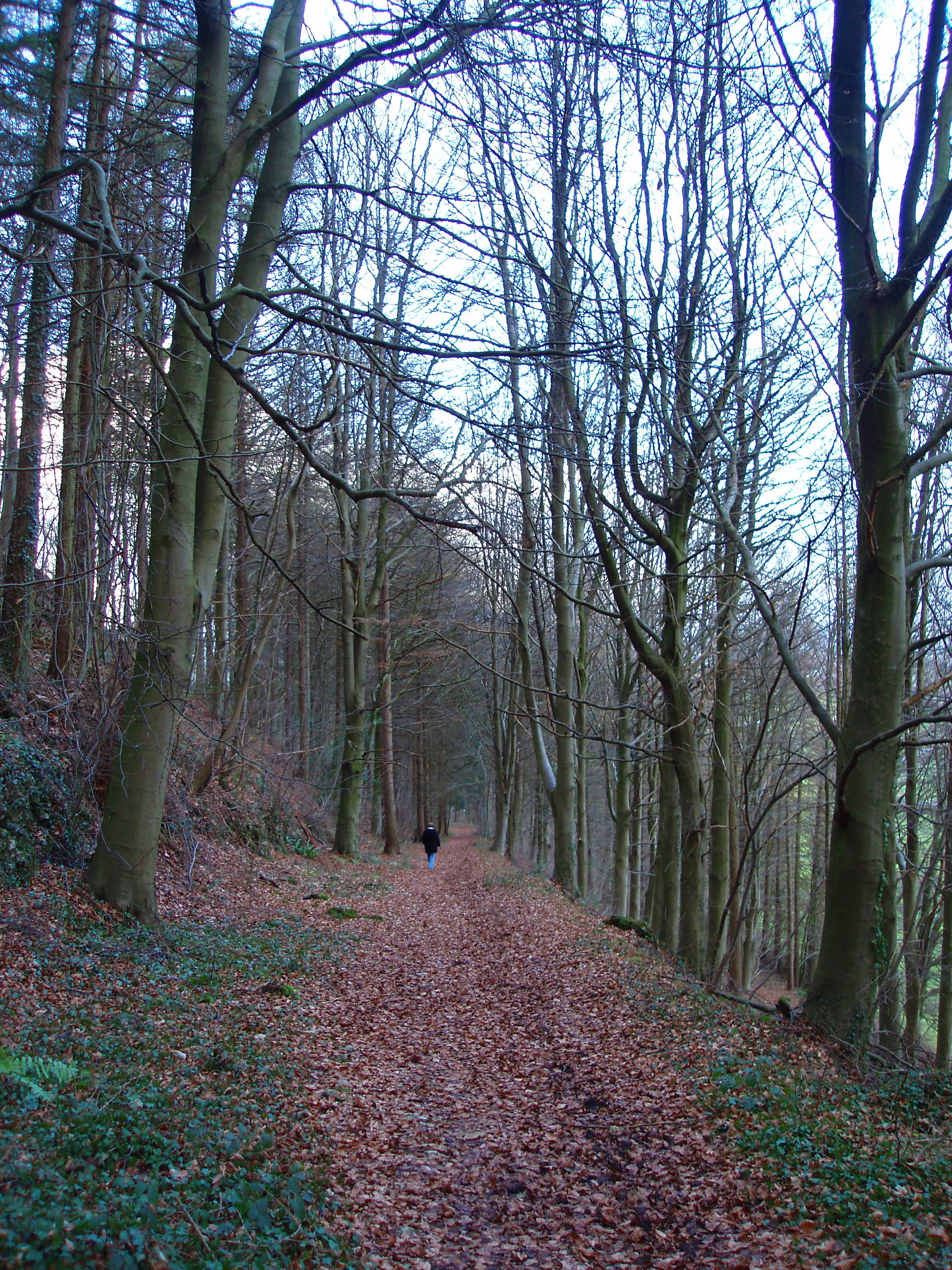 a distant lone individual walking through a winter woodland