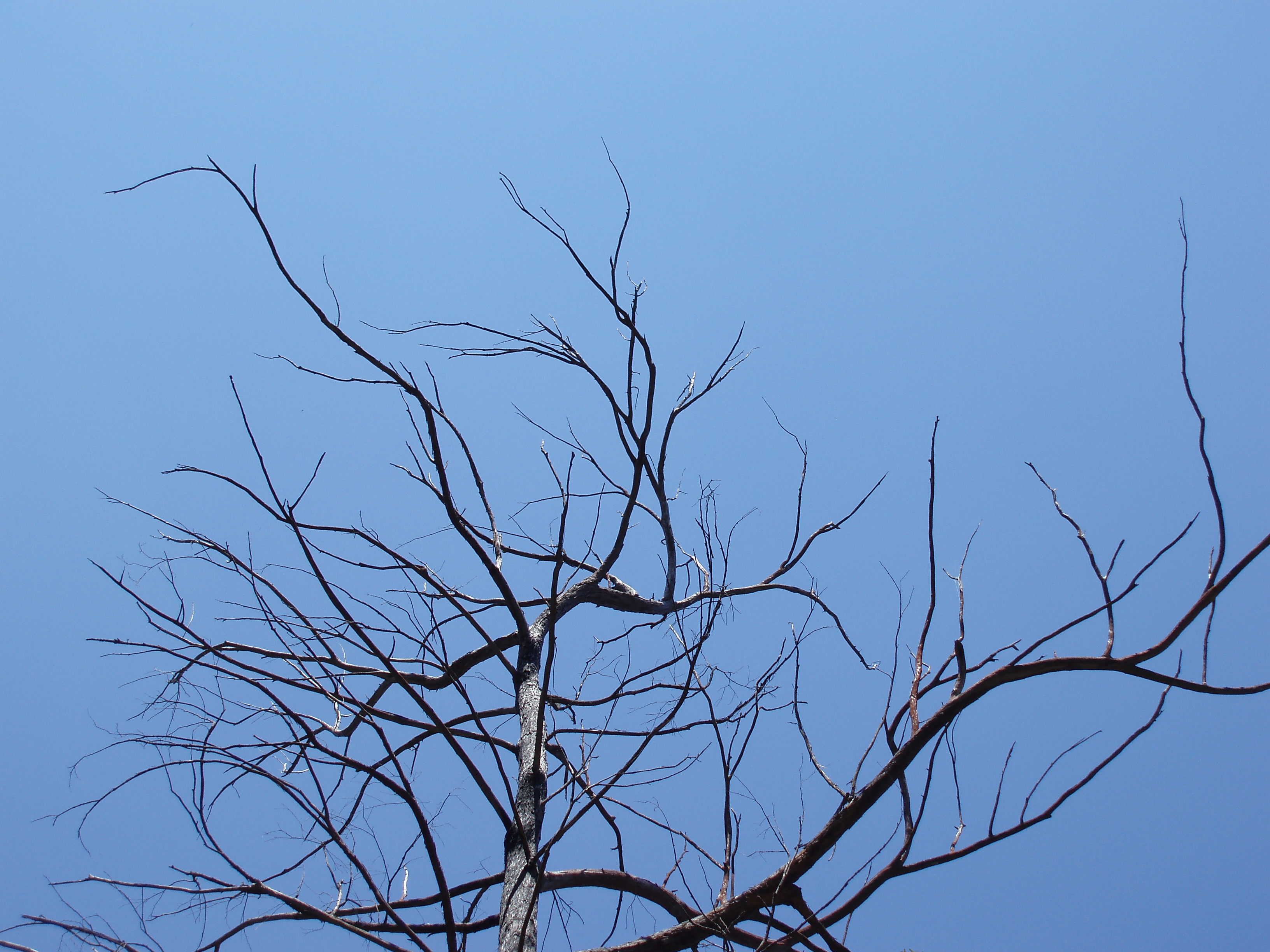 blue sky and moribund branches