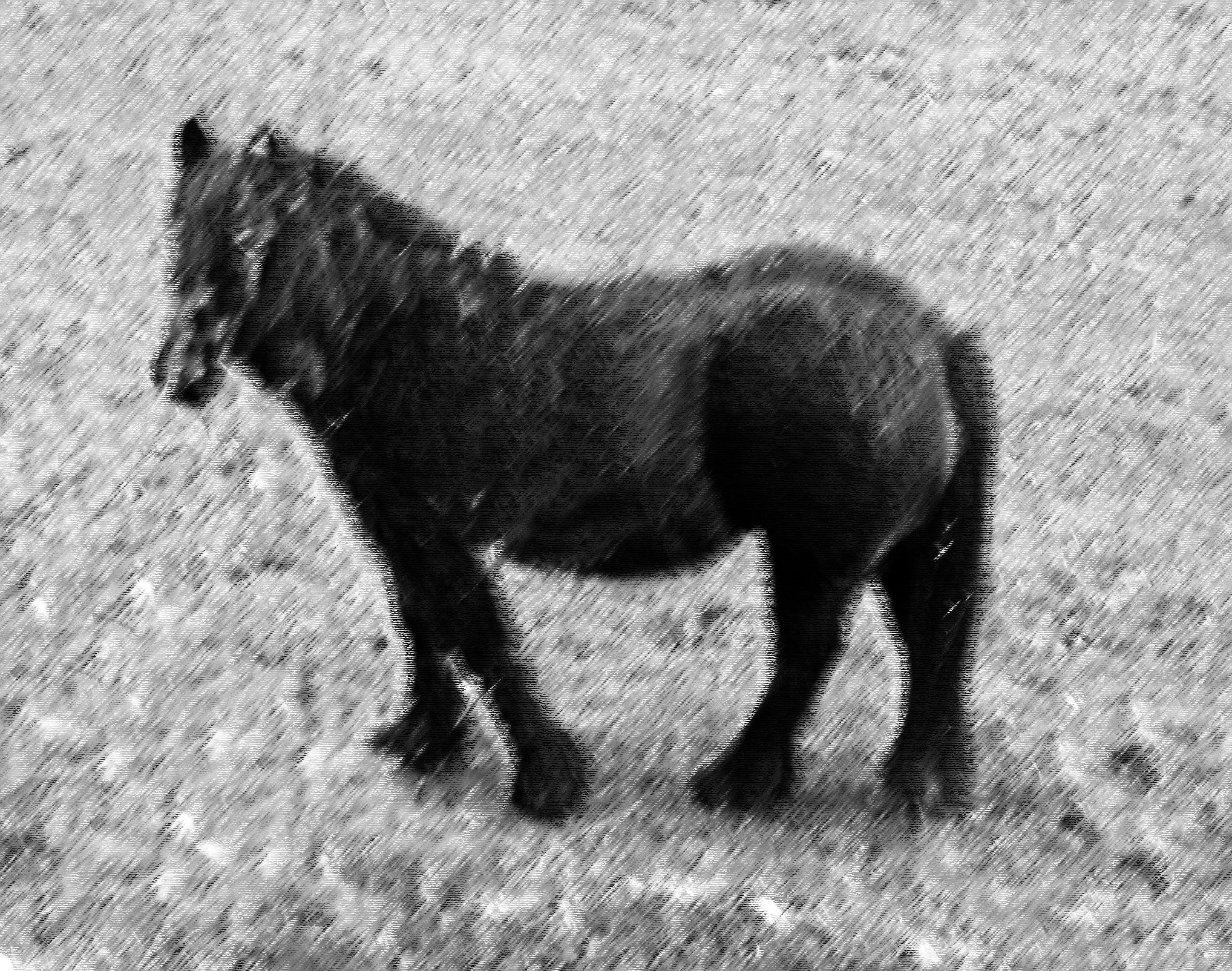 charcoal drawing effect pony