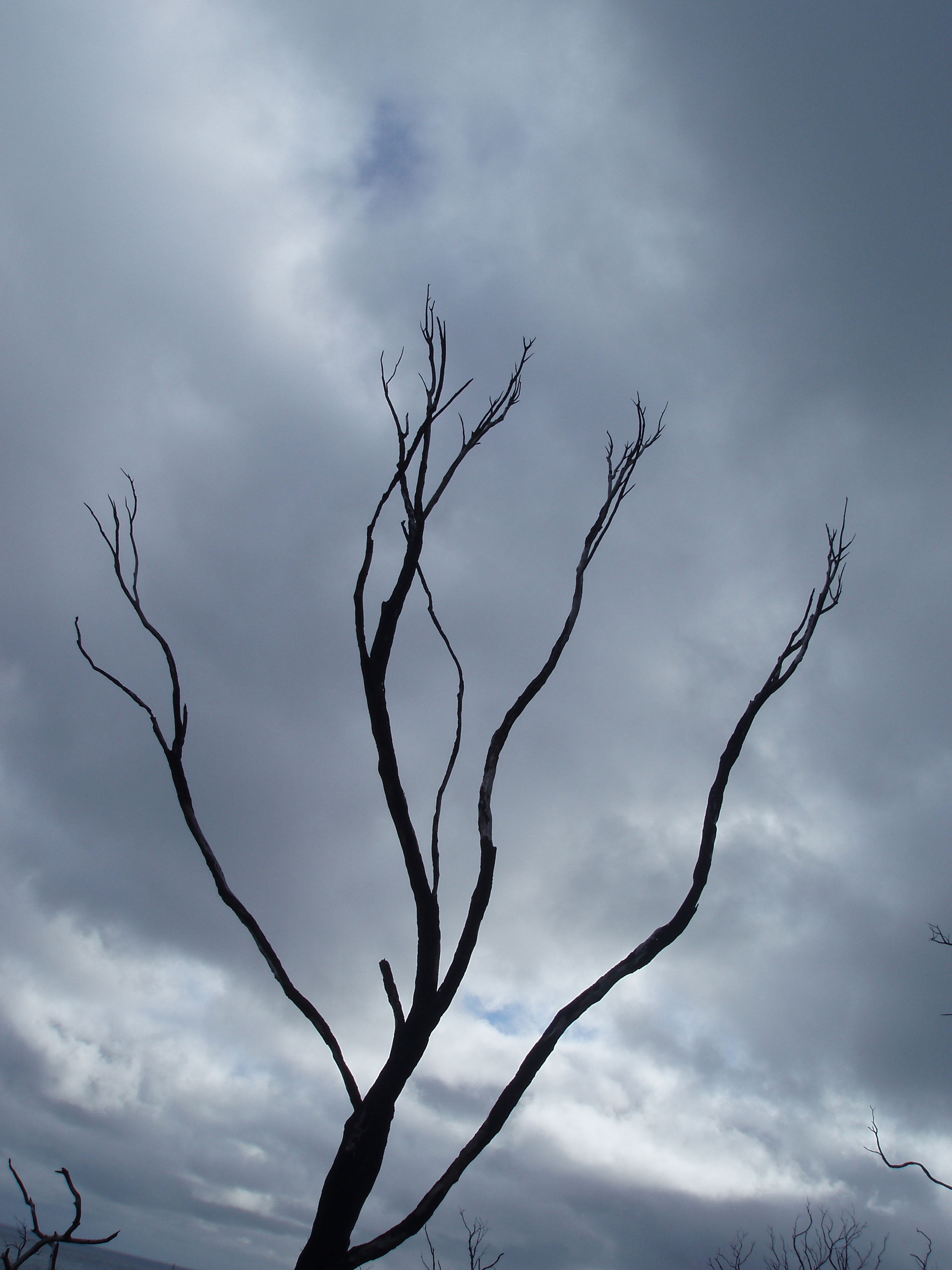 winter tree branches on a stormy day