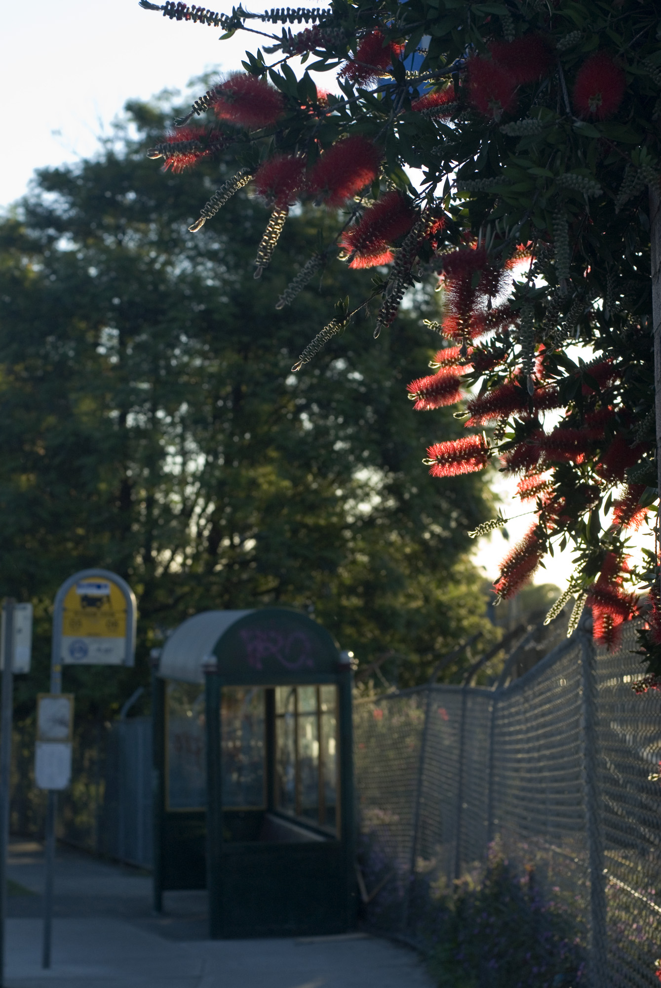 bus stop and bottle brush