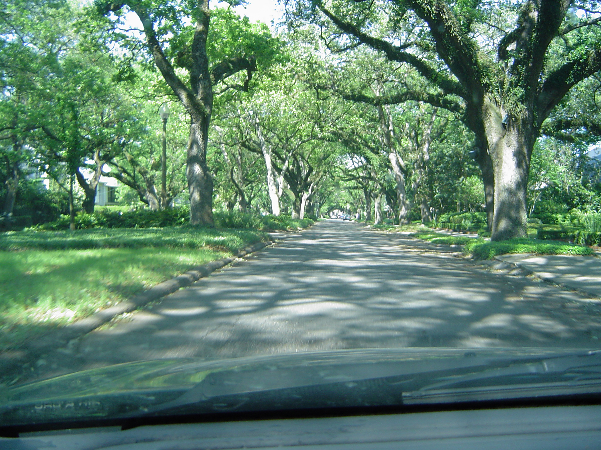 blurred suburuban tree lined avenue with dappled sun