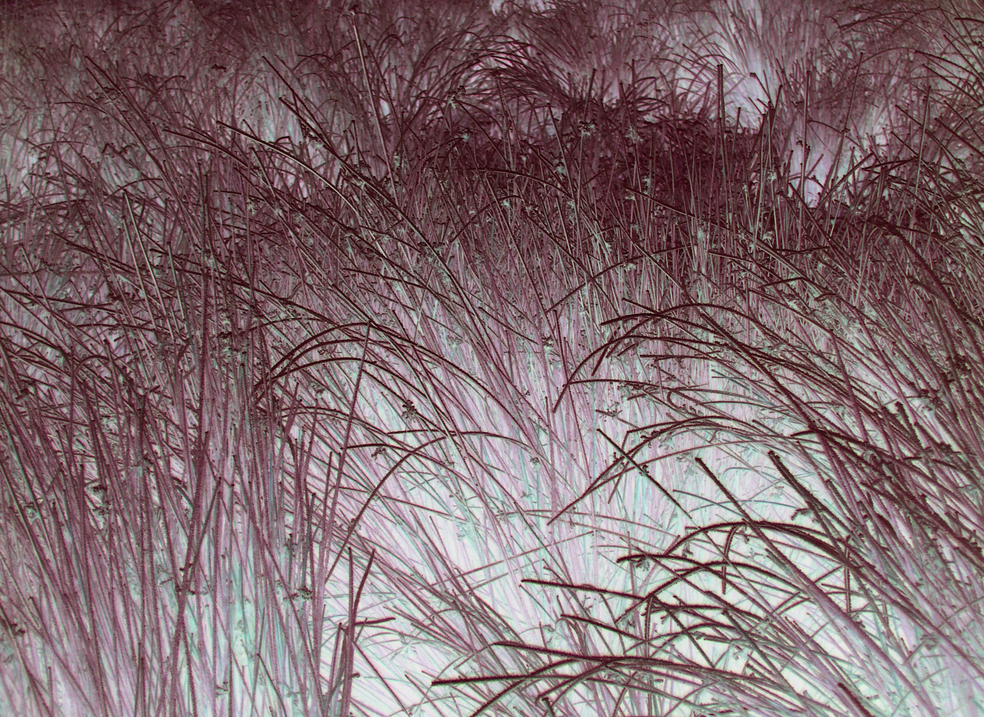 surreal colourised image of long grass