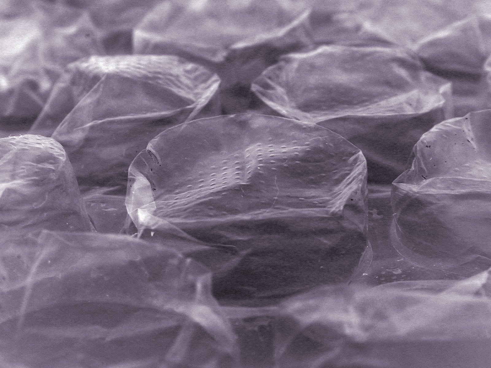 macro image of the surface of a bubble wrap sheet
