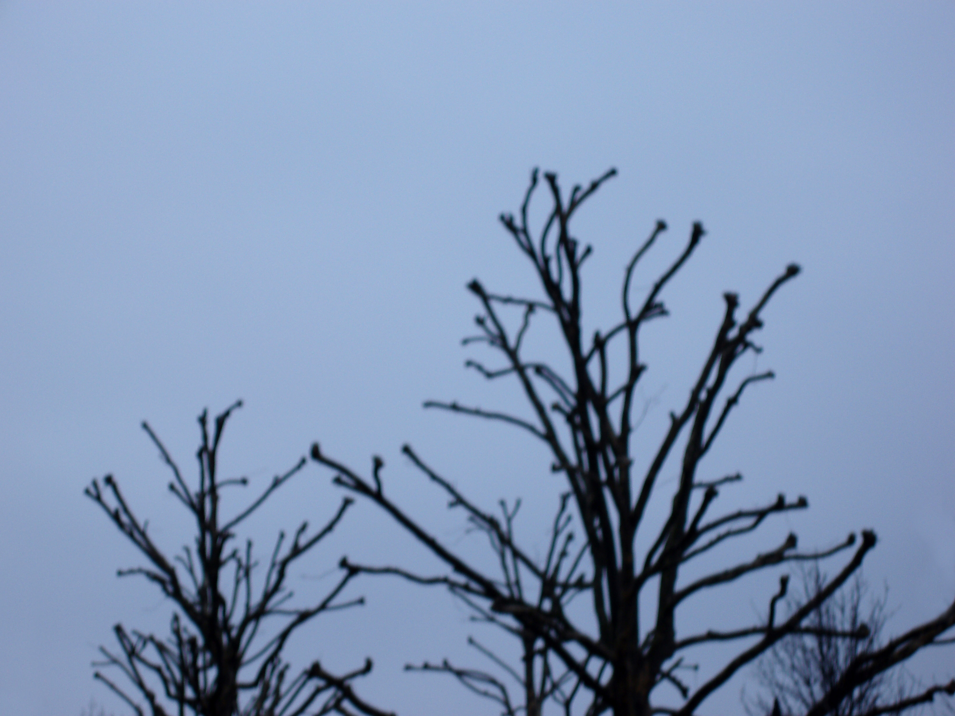 defocused organic design abstract - trees silhouetted against a gloomy sky
