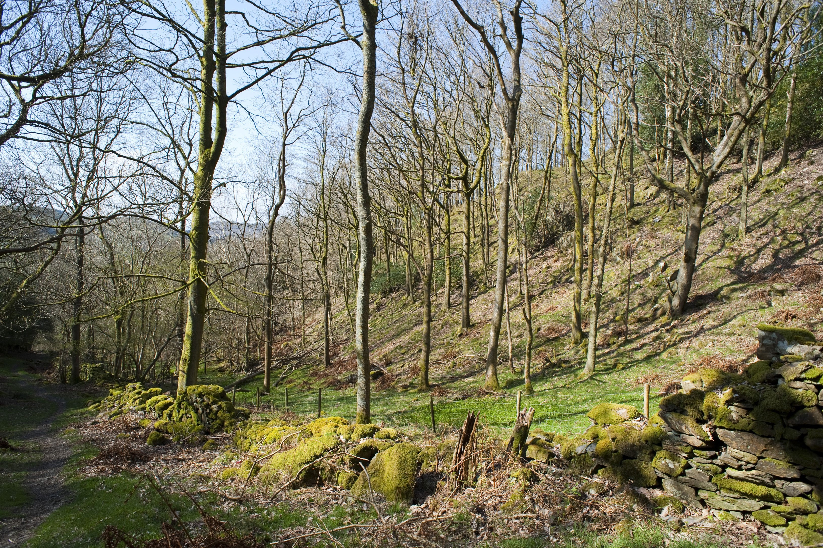 View of scenic English woodland with bare deciduous trees in late autumn or winter