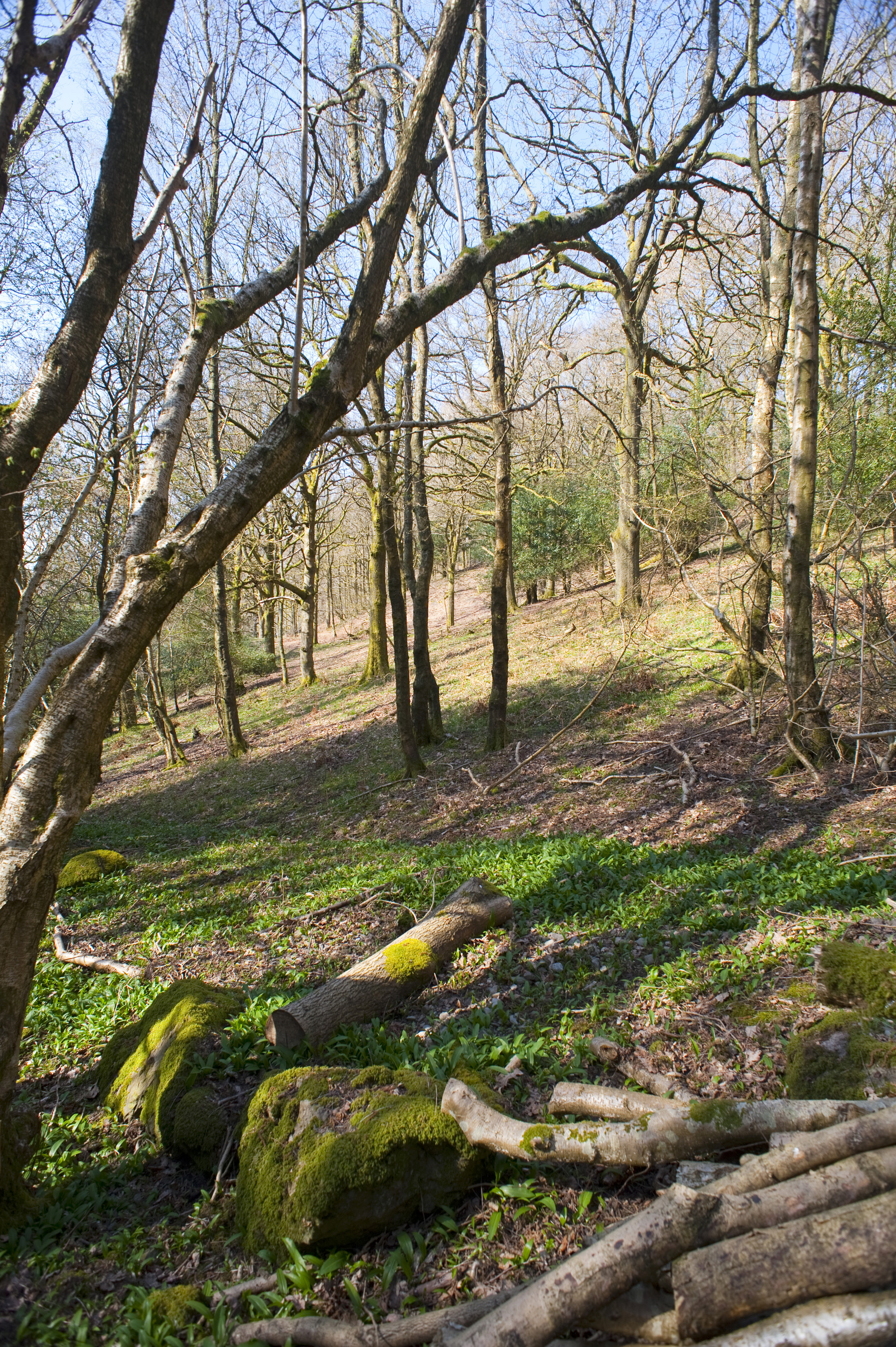 a wooded hillside in spring
