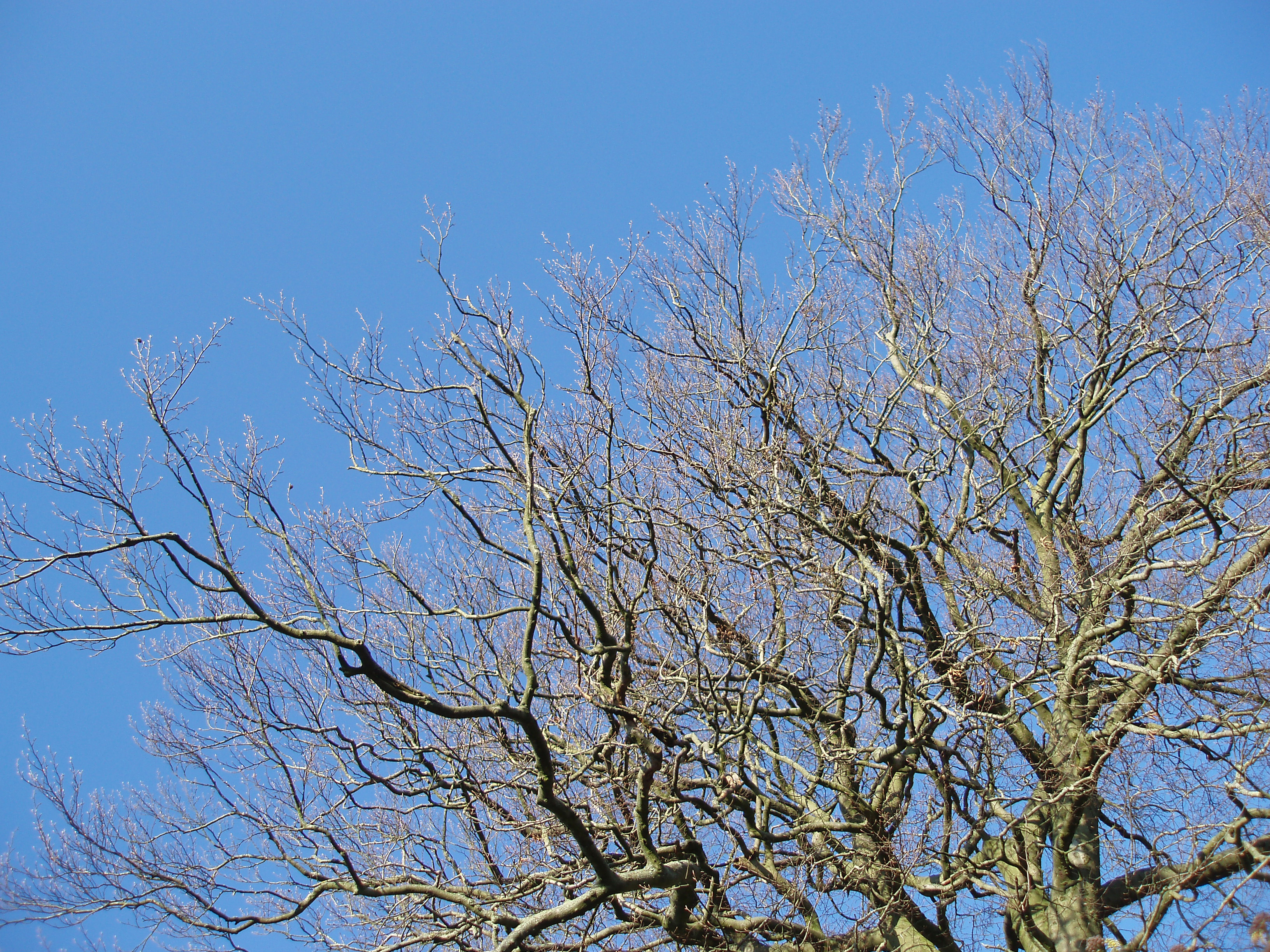 tree without leaves against a blue sky on a sunny day