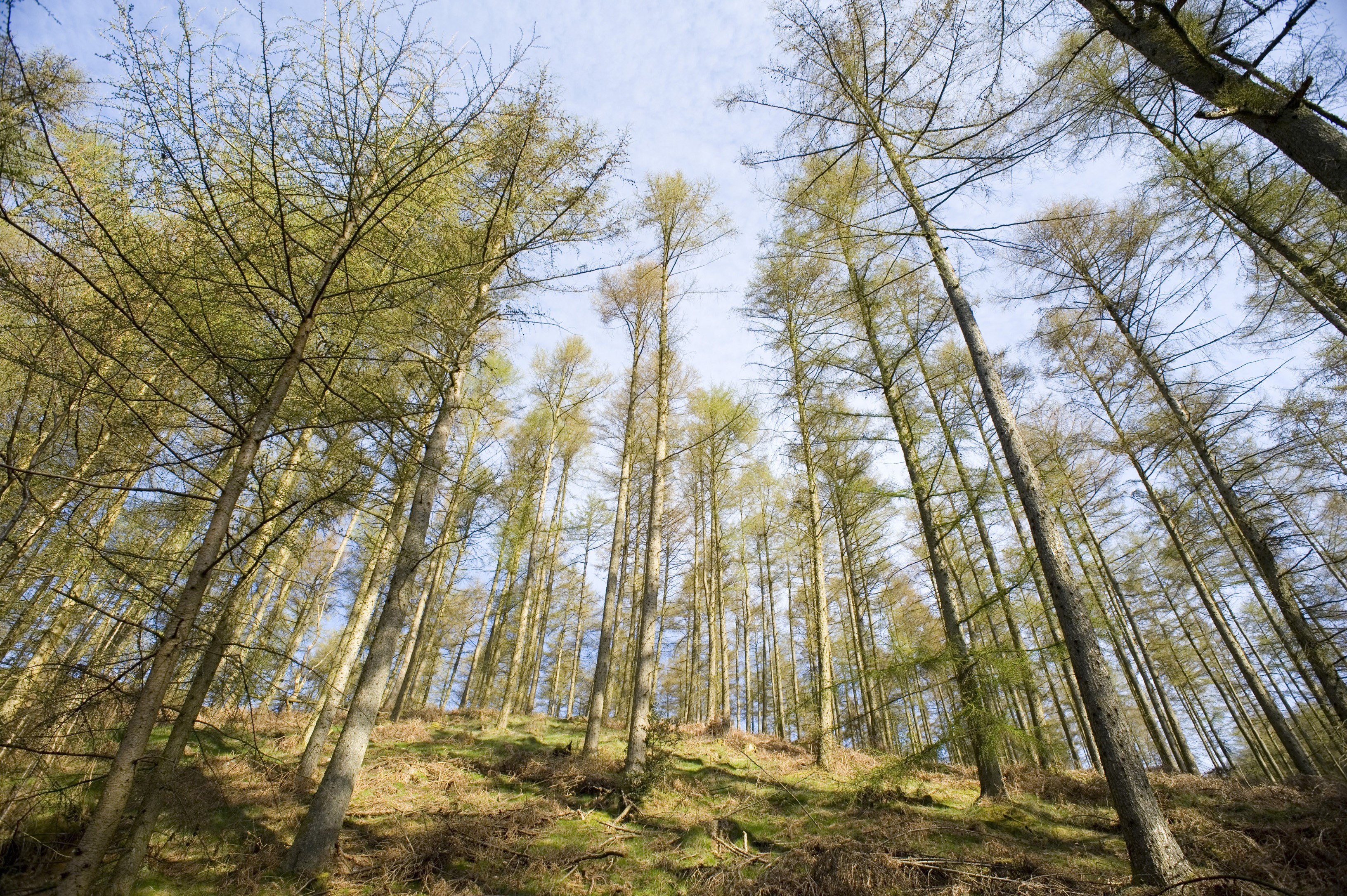 a low angle wide angle view of trees growing in the woods
