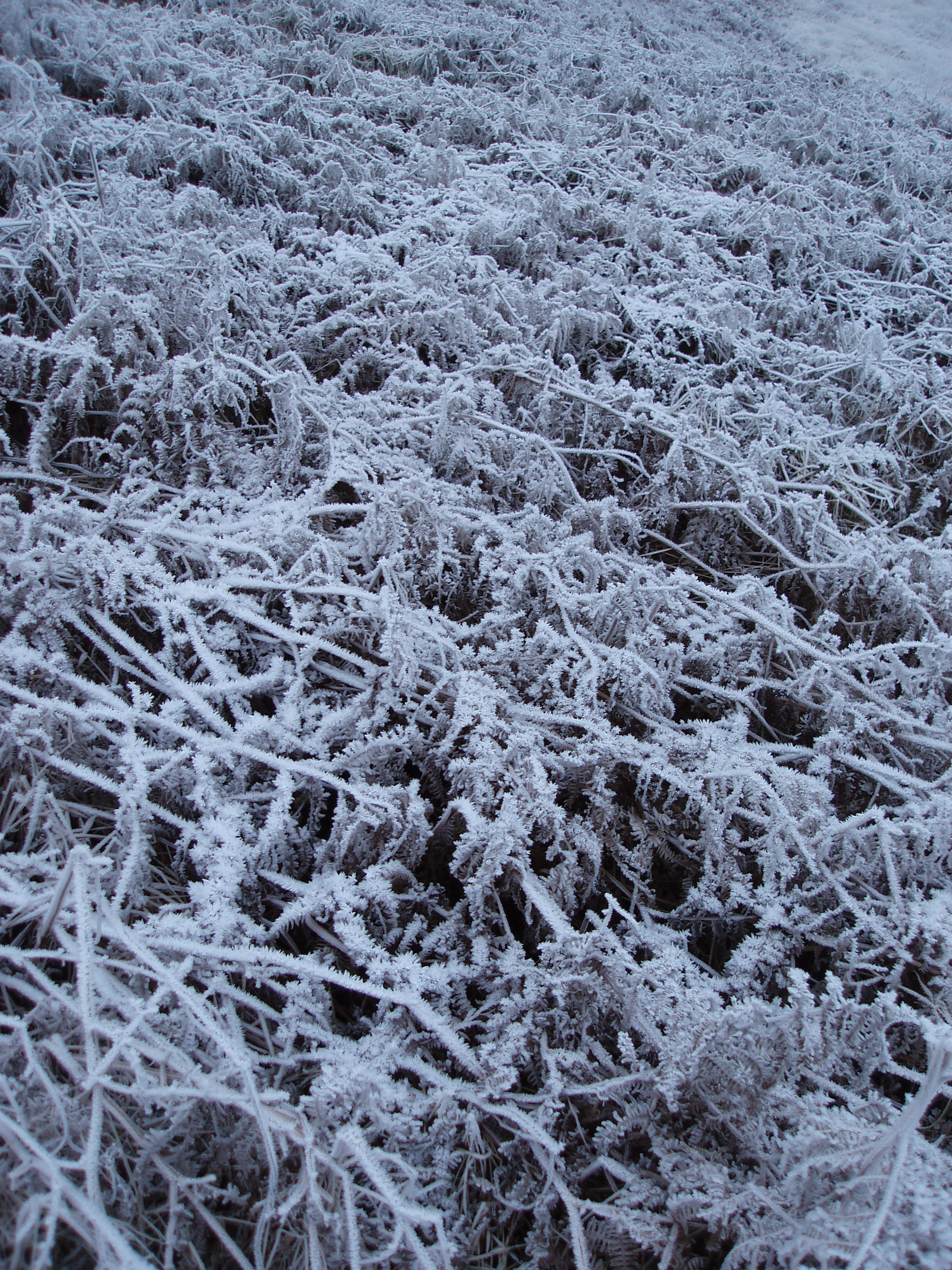 frozen braken background covered in icy white frost crystals