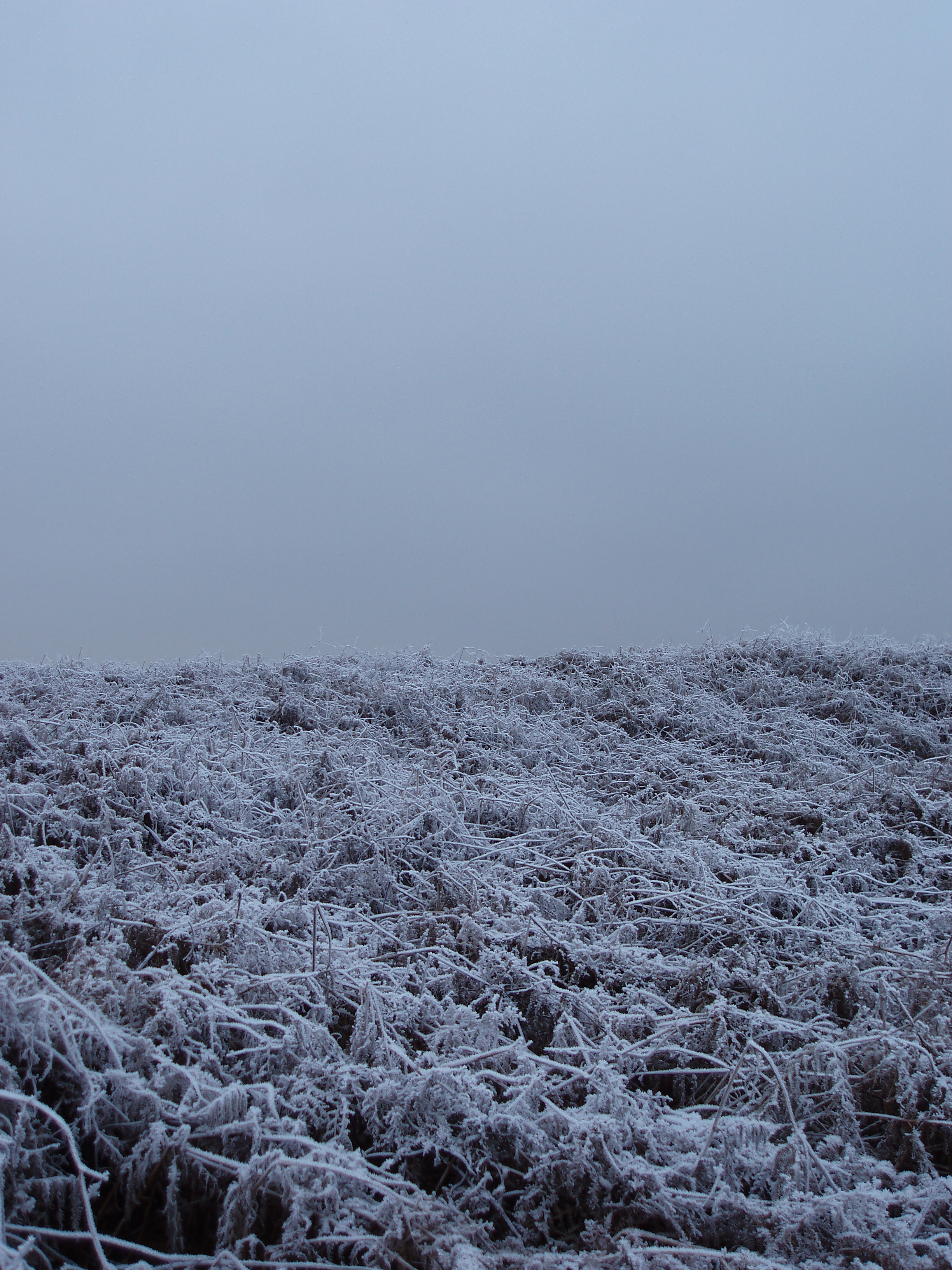 foggy sky and frost covered bracken on the common/fell