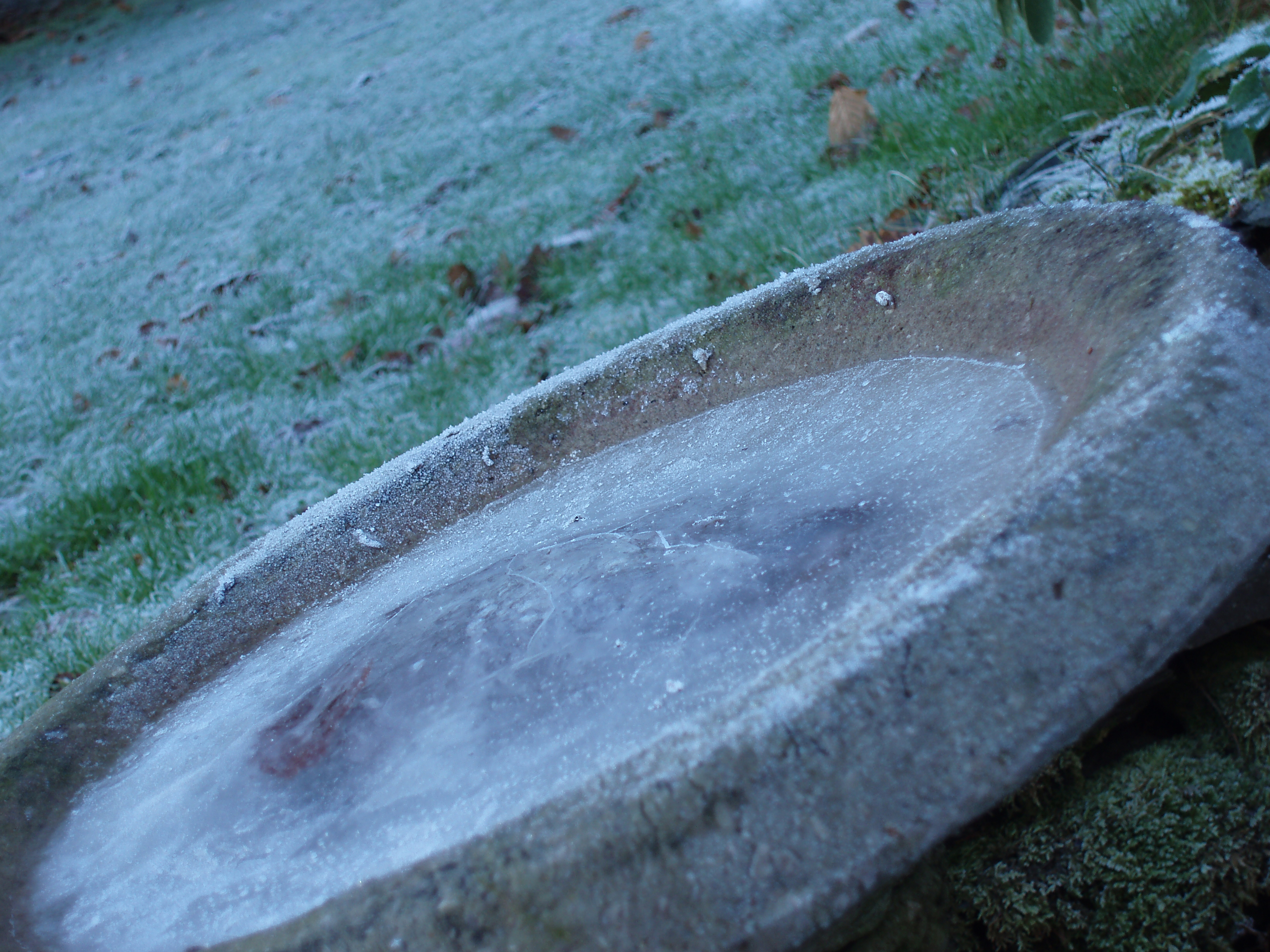 frozen birdbath and frost lawn winter morning scene
