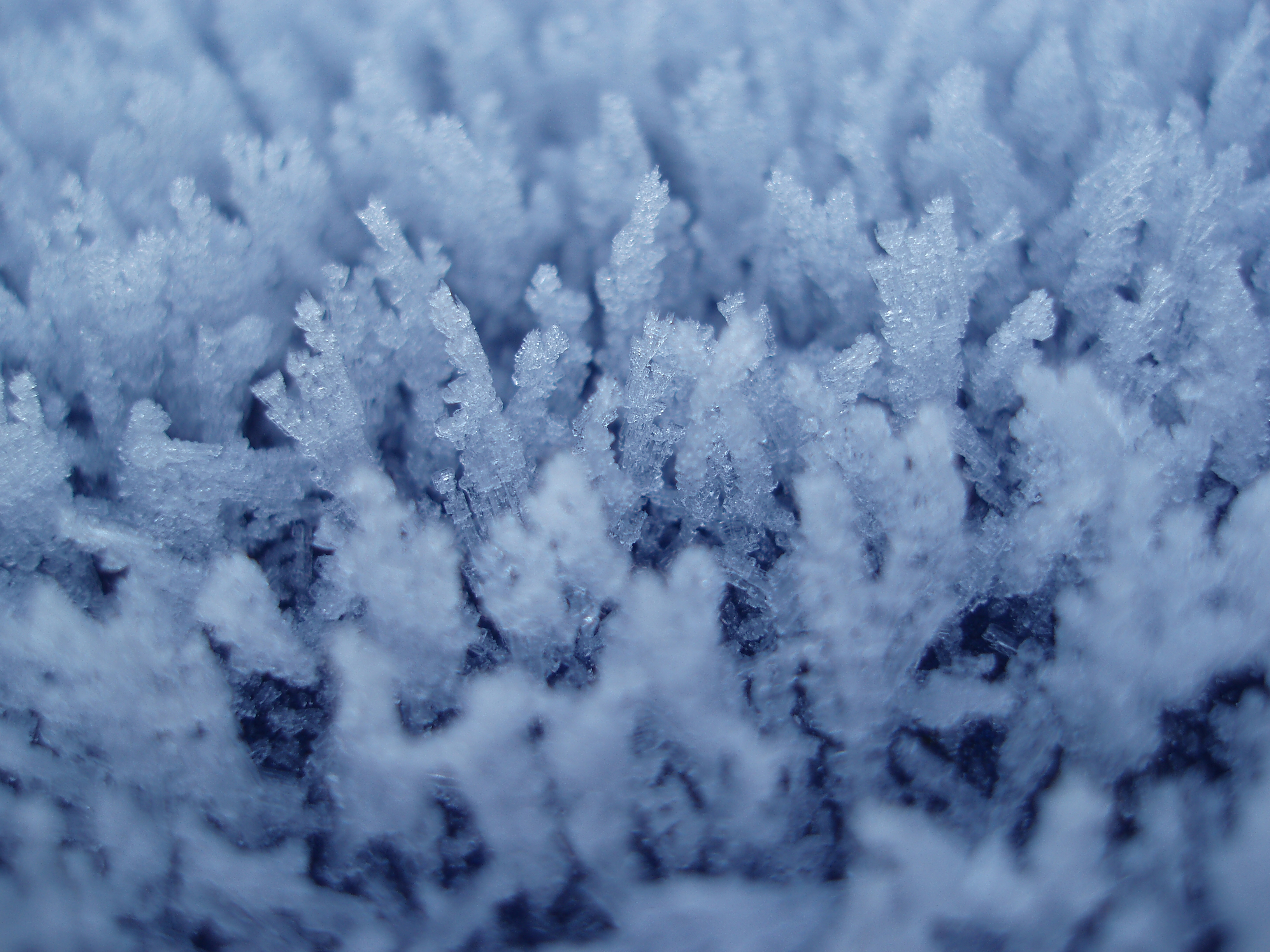 frosty spiky growths of winter hoar frost