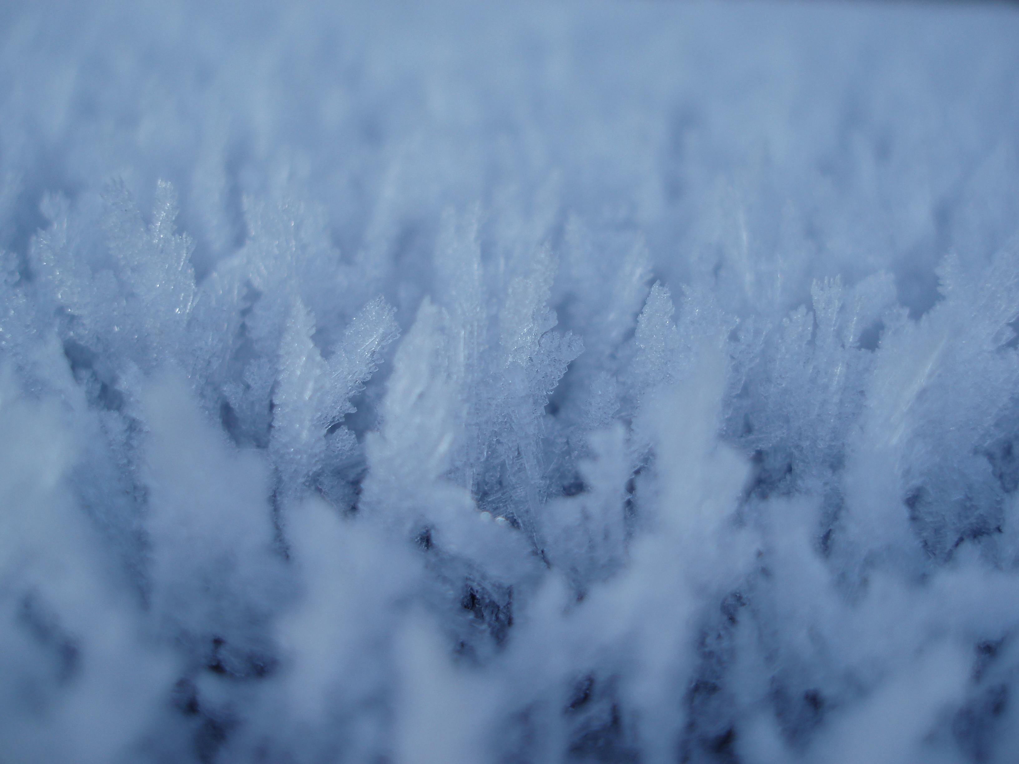spike growths of hoar frost stretching  into long icy needles