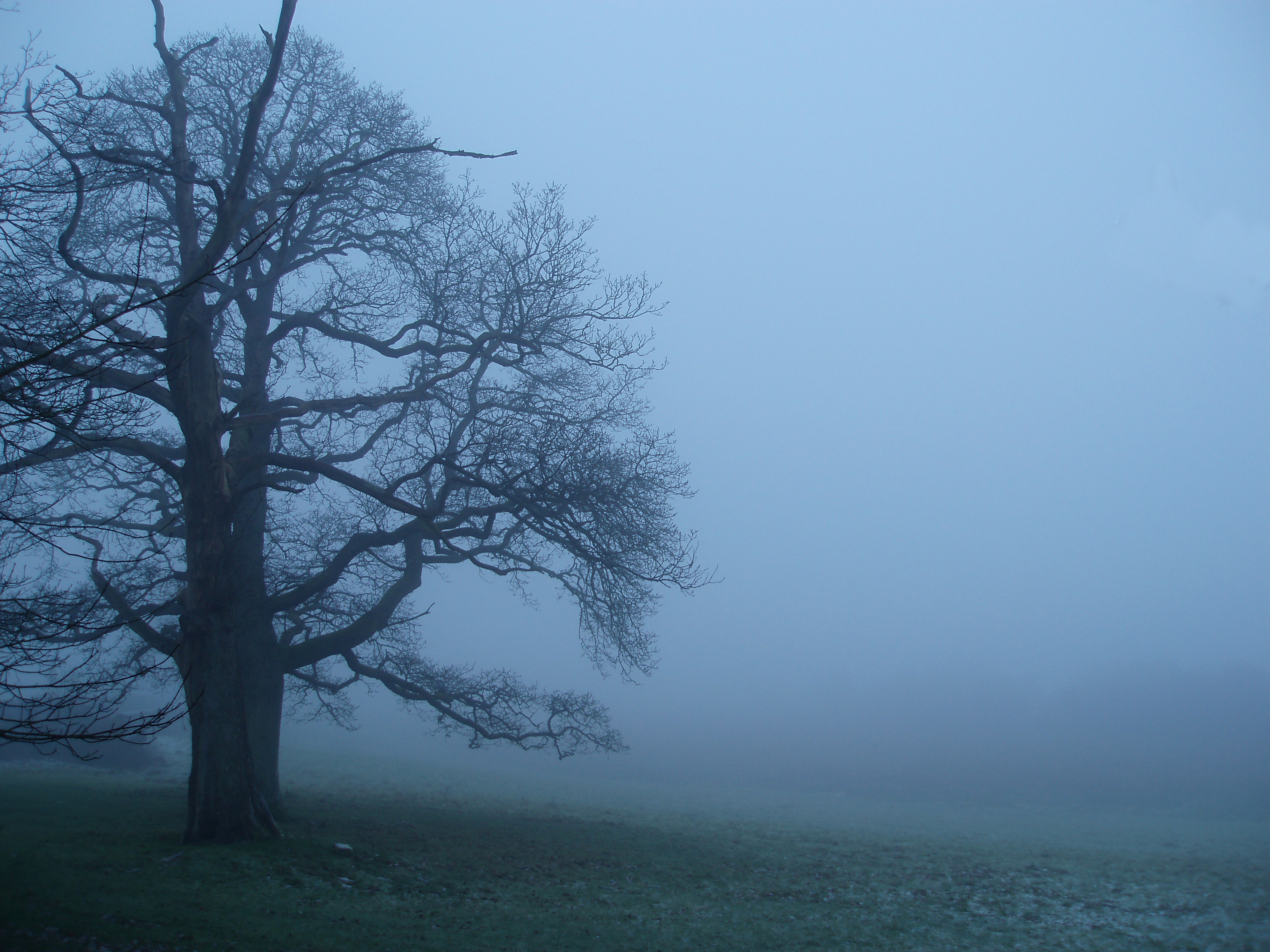 misty, foggy winter dawn with a leafless tree silhouetted against a misty background