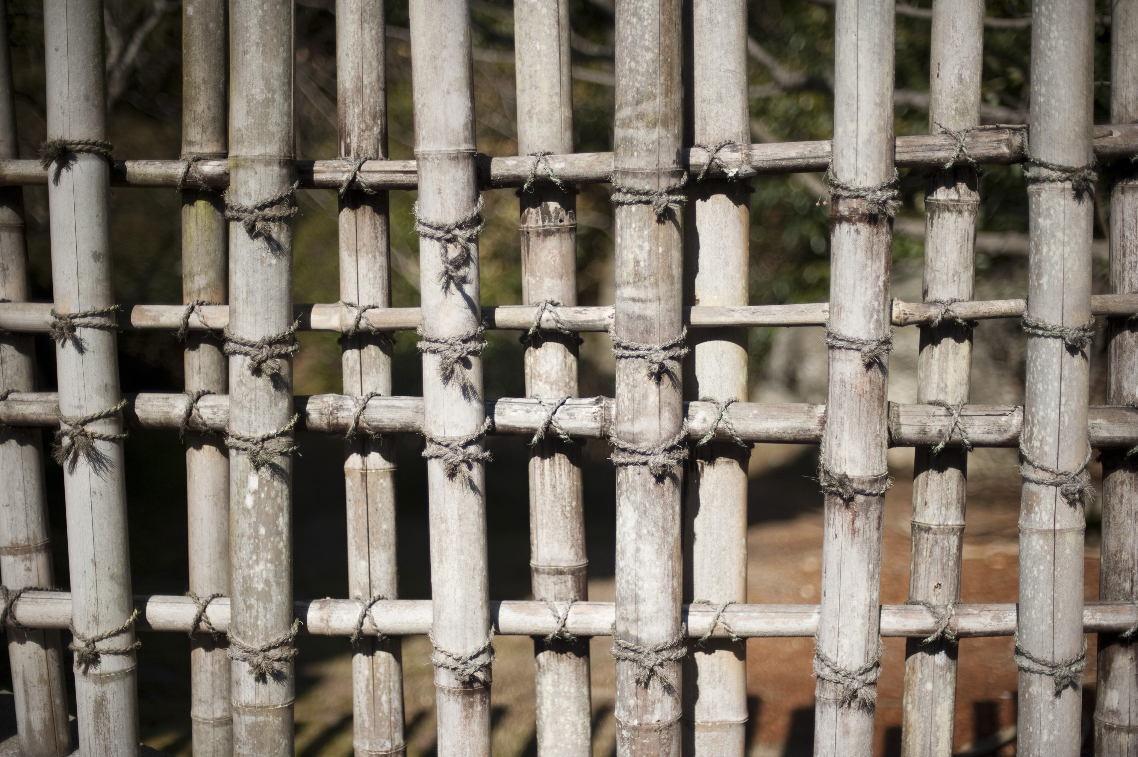 Rustic bamboo garden trellis of weathered dried colums lashed together in a lattice