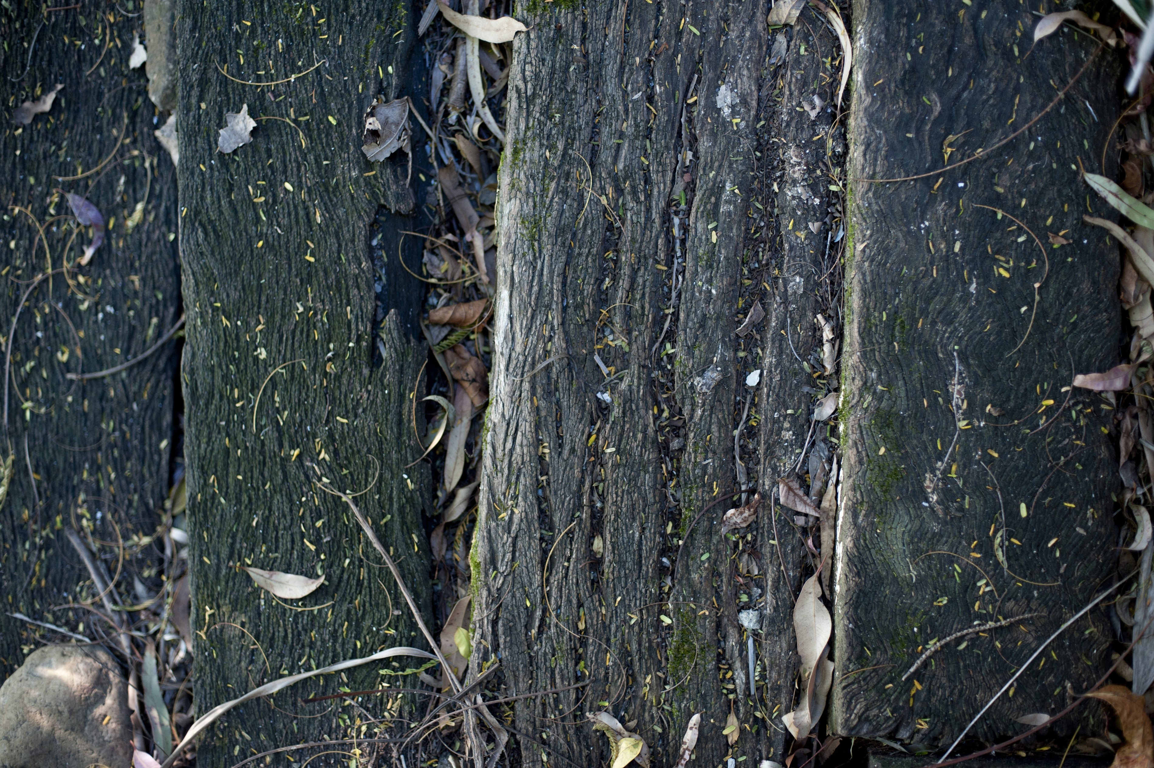 Background texture of old slats or boards of rotten wood with a weathered rough surface