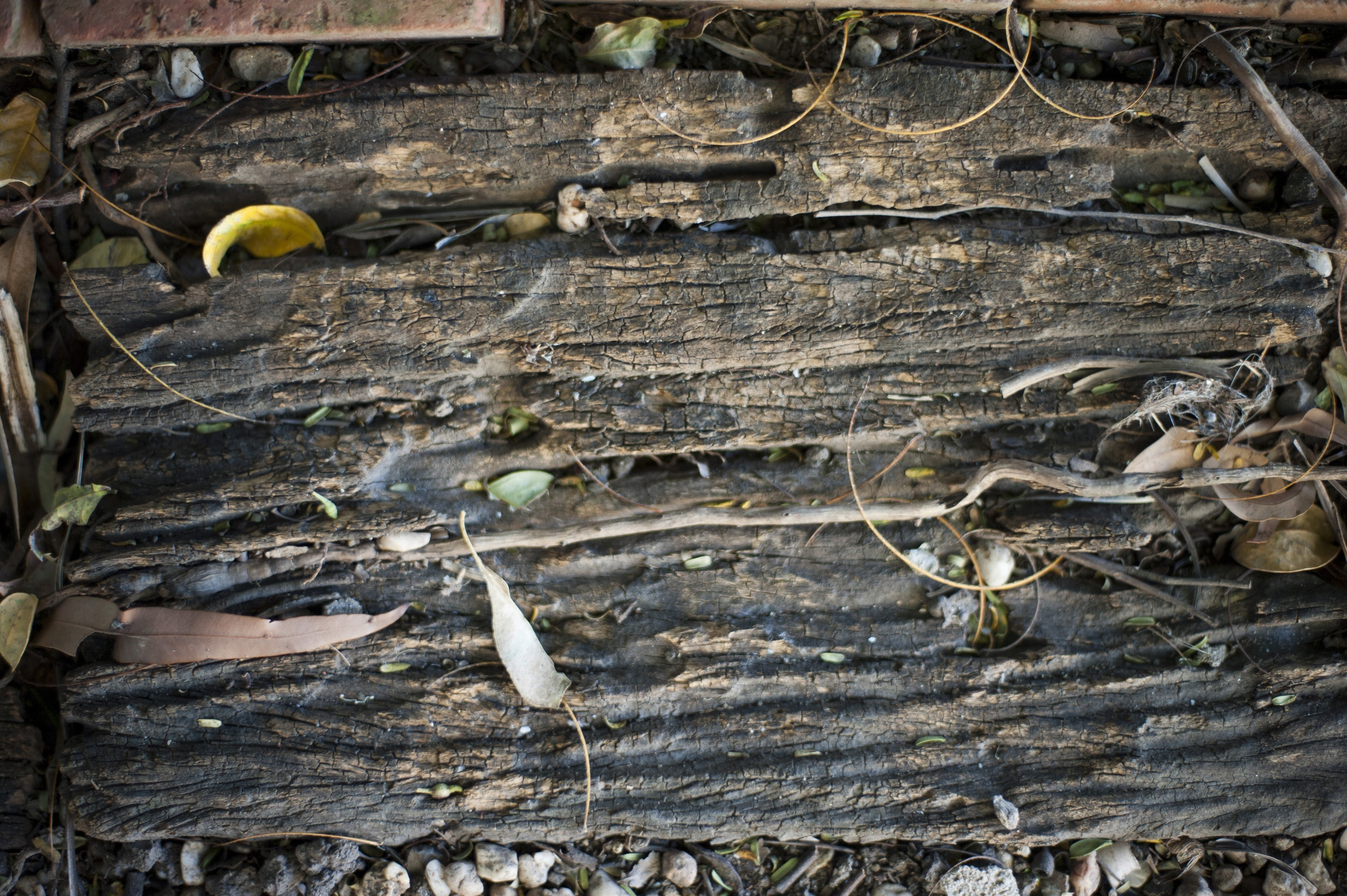 Decaying rotting wood lying on the ground outdoors with scattered leaves, background texture