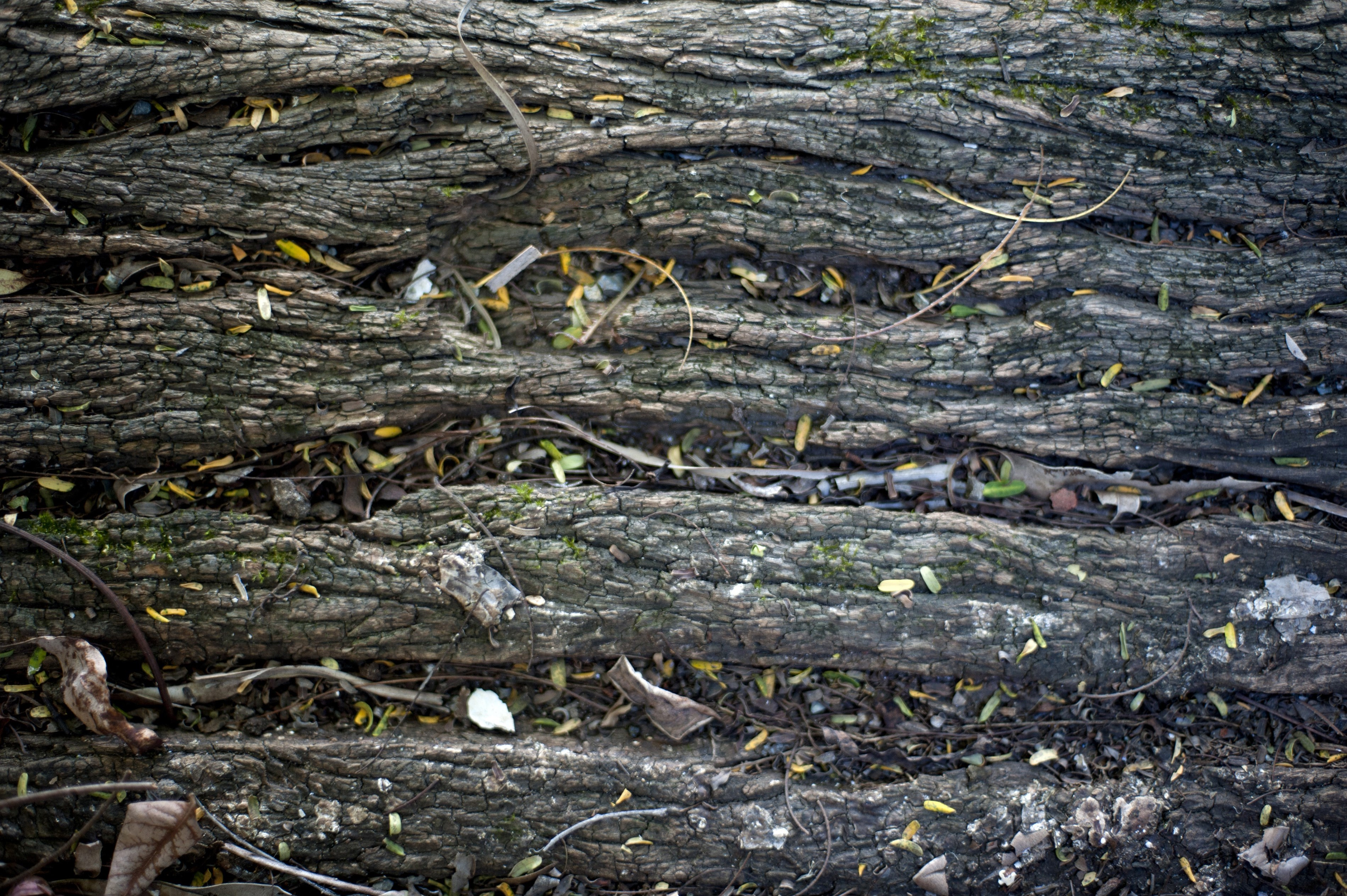 Closeup background texture of wood rot in damp wood showing the destruction of the natural structure